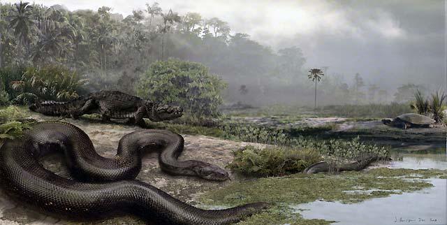 Titanoboa, la serpiente del Paleoceno, arroja luz sobre el cambio climático