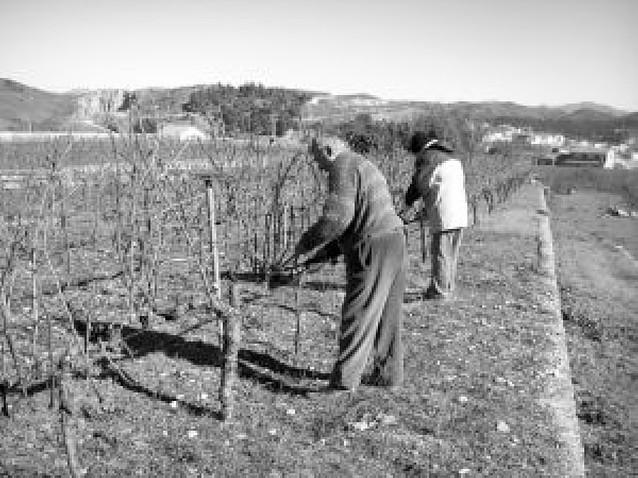 Finaliza el curso de poda de viña para desempleados de Estella