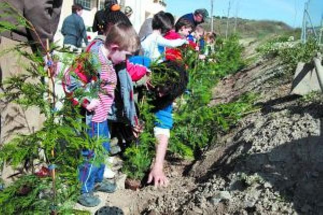 El colegio de Sesma realizó la plantación de cipreses aplazada por la lluvia