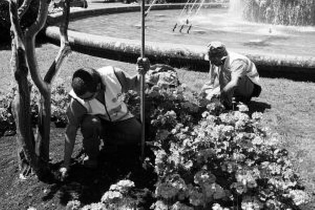 80.000 flores para adornar Pamplona desde primavera
