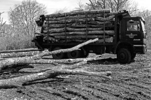 La crisis maderera se agudiza en Améscoa y deja la subasta forestal bajo mínimos