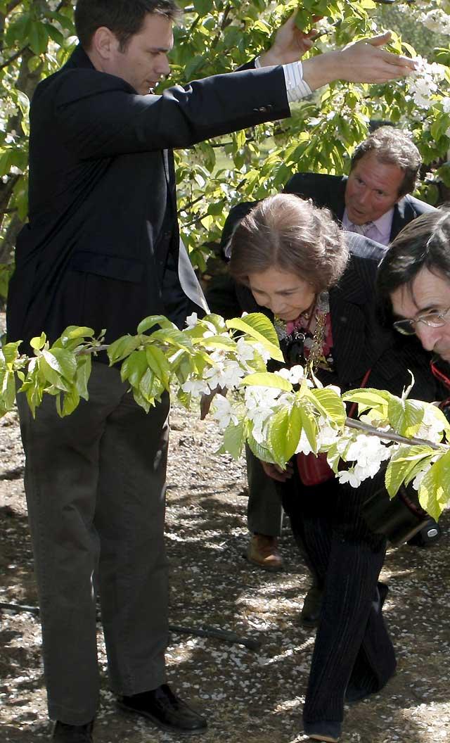 """La Reina, """"fascinada"""" los cerezos en flor del Jerte"""
