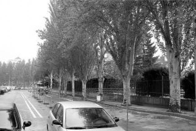 """El Ayuntamiento talará ocho chopos que """"levantan"""" la acera de la calle Malón de Echaide"""