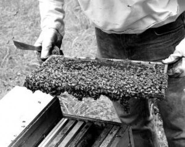 El pastor de las abejas