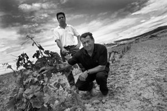 Arróniz dice adiós a un tercio de sus viñedos