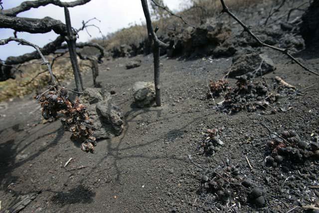 El Gobierno de Canarias da por controlado el incendio en La Palma