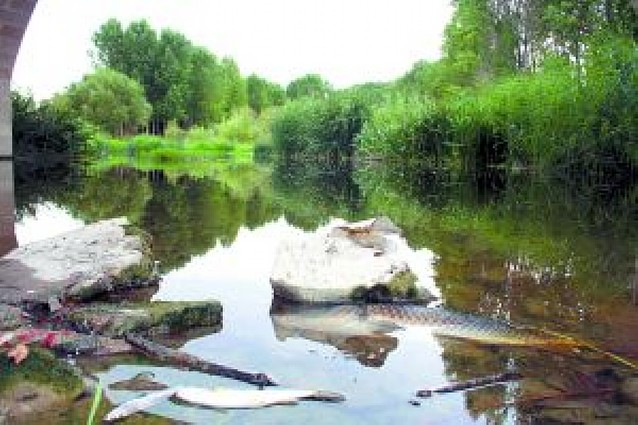 Un vertido del polígono Orkoien-Arazuri, causa de la muerte de peces en el Arga