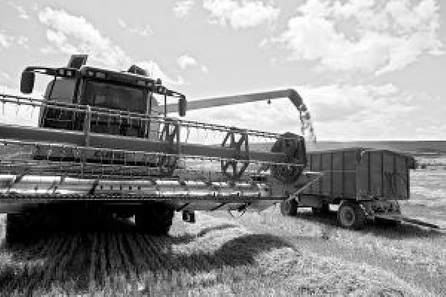 La cosecha de cereal se cierra con 581.000 tm