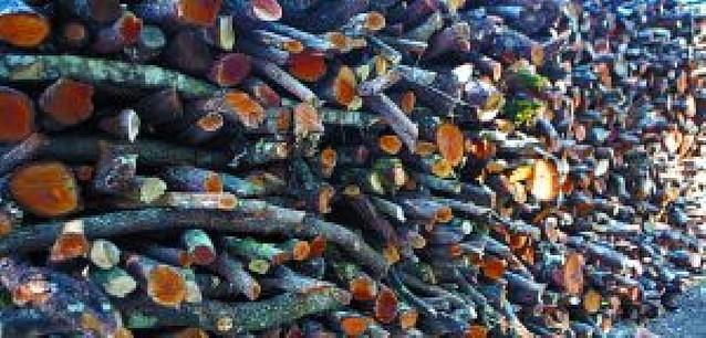Vidas de carbonero