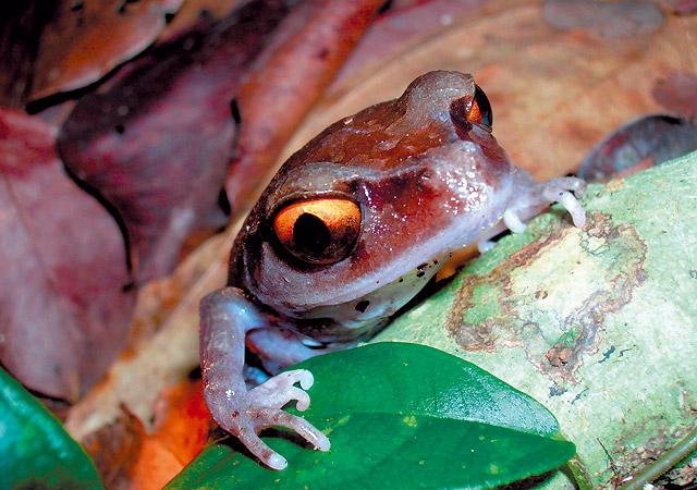 350 especies nuevas en el Himalaya