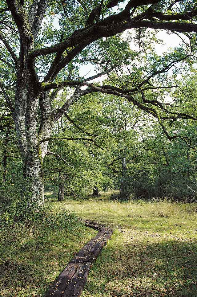 Un día en el corazón de un bosque y su entorno