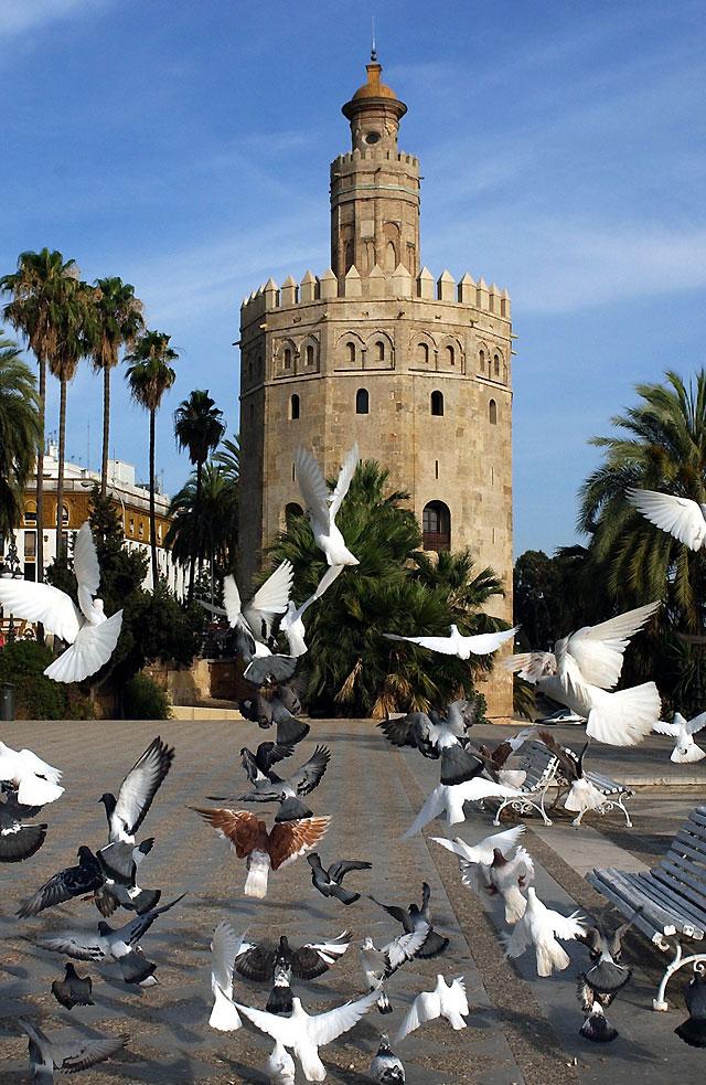 Las aves-plaga, el gran foco de enfermedades que habita en las ciudades