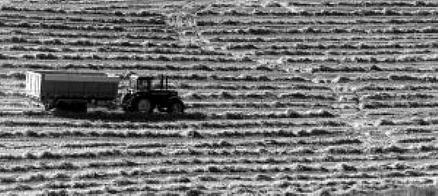 El suelo seco retrasa la preparación de la siembra de cereal