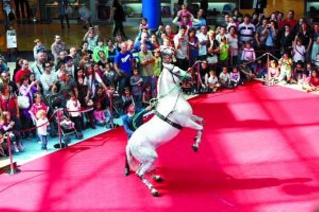 Hípica Zahorí ofrece una exhibición ecuestre en el centro comercial Itaroa