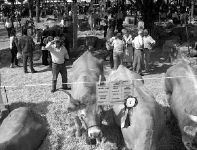 Elizondo premia la mejora del ganado pirenaico